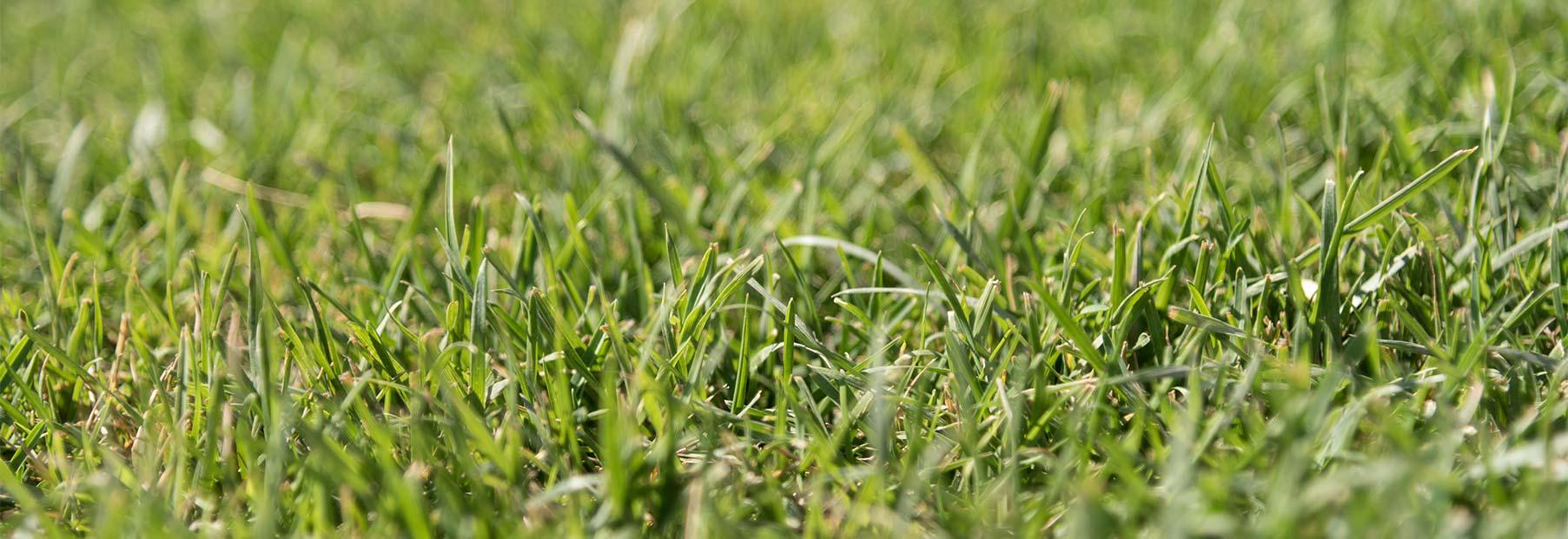 Giardini Da Incubo 2016 come eliminare le lumache da orto o giardini | horti della
