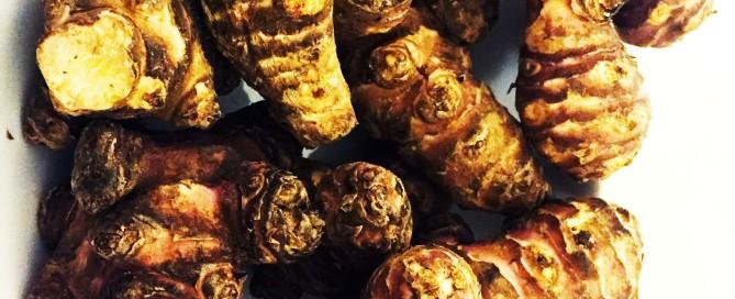 topinambur horti della marcigliana